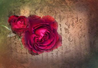 Rose on a vintage letter