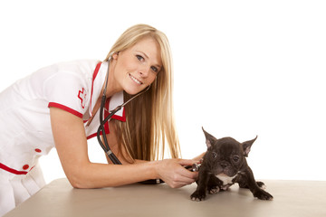 nurse with small dog listen with stethoscope