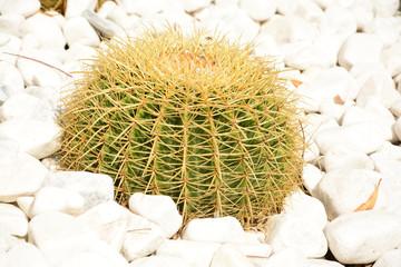 Kaktusgarten