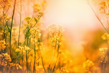 Yellow flowers - Spring in a meadow