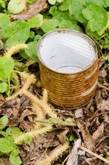 Rusty tin in grass
