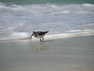 Beach Birds-3