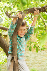 Little boy climbing a tree and peeking down from above.
