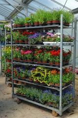 roll de plantes annuelles