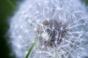 Die Struktur der Pusteblume; Makroaufnahme einer Löwenzahnblüte © nameissobst