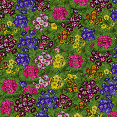 flowers background with various variety and colors