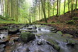 eau et forêt