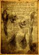 Anatomy - 64500683