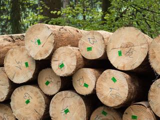Forstwirtschaft - Hochwertiges Holz mit Losnummern