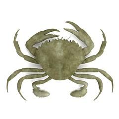 realistic 3d render of crustacean - liocarnicus vernalis