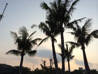 ヤシの木と夕暮れ