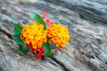 lantana flower on wood ground