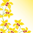 orchidee, floral, blume,blüte,rispe,pflanze,phalaenopsis,gelb