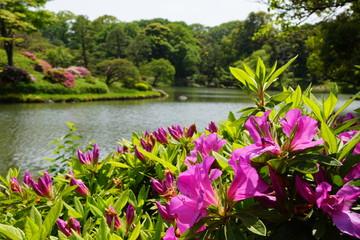 春の六義園の景色
