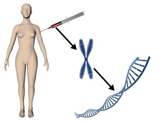 Du corps à l'ADN