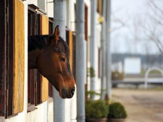 Schlafendes Pferd am Fenster vom Stall