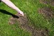 Leinwanddruck Bild - Rasenpflege