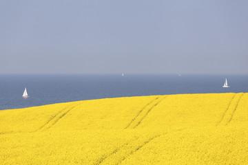 Rapsfeld an der Ostsee,Schleswig-Holstein,Deutschland