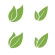 Leaf Pair Icon Vector Illustrations on Both Solid - 64519012