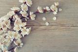 Beautyful blossom branch - 64519458