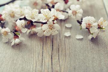 Beautiful blossom branch