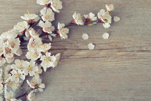 Poster Lente Beautyful blossom branch