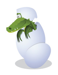 Crocodile and egg