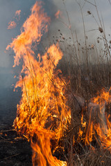 Burning dry grass