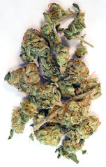 Green Buds Marijuana Plant Flower Cannibis Natural Medicine