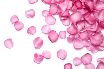 Petals of pink rose