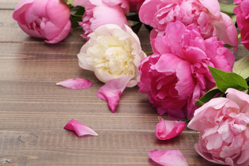 pink peonies on wooden background