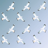 ornamental repetition of gulls against the sky poster