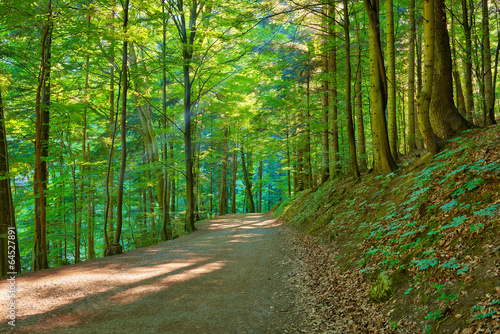 Path by the green forest. Trekking trail in nature reserve.