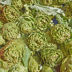 fresh artichokes for sale, natural background