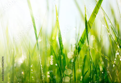 Fresh green grass with dew drops closeup. Soft Focus - 64529074