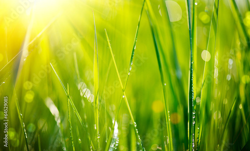 Foto op Canvas Weide, Moeras Fresh green grass with dew drops closeup. Soft Focus
