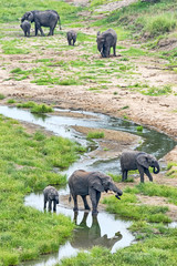 Tansania-Elefant-11862