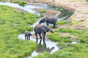 Tansania-Elefant-11861