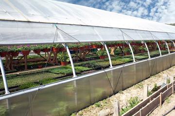 Ornamental flowers grows in greenhouse nursery plants