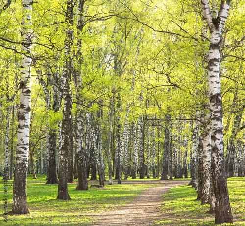 wieczor-pogodny-wiosny-brzozy-park-z-pierwszy-zieleniami
