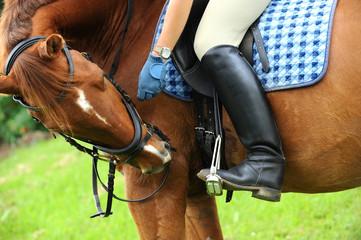 Pferde 135