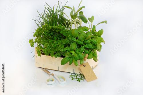 Kiste mit Gartenkräuter - 64534463