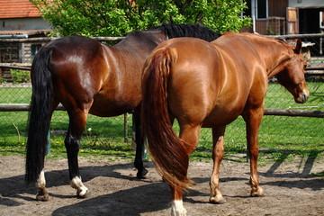 Pferde auf dem Reiterhof