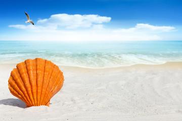 Jakobsmuschel steckt im Sandstrand