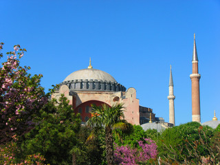 Hagia Sophia behind the trees