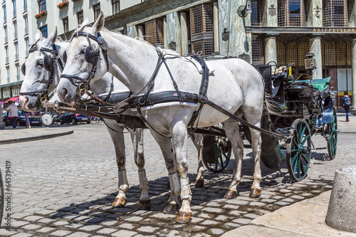Traditional coach (Fiaker) today traveling tourists in Vienna, A