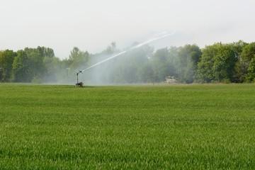 Bewässerung mit Sprenger