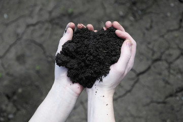 Hand holding soil, dry soil on background