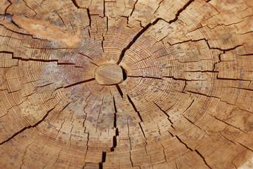 rissiges Holz