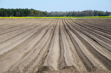 Newly ploughed rows